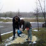 12 декабря 2018 года в лицее учащиеся (овощеводы) занимались укрытием роз на зиму древесными опилками.